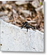 Rock And Robber Fly Metal Print