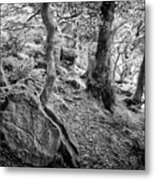 Rock And Trees Metal Print
