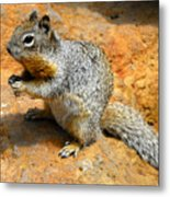 Rock Squirrel Metal Print