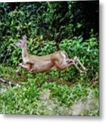 Rocking Deer Metal Print