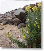 Rocks And Flowers Metal Print