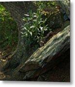 Rocks And Rhododendron At Chimney Rock Metal Print