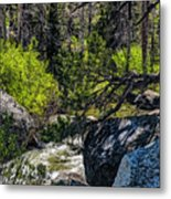 Rocks Water And Knarly Branches Metal Print