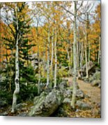 Rocky Mountain Aspens Metal Print
