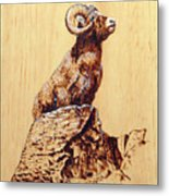 Rocky Mountain Bighorn Sheep Metal Print