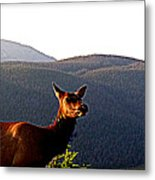 Rocky Mountain Elk Vi Metal Print