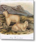 Rocky Mountain Goats Metal Print