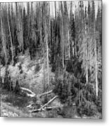 Rocky Mountain High Elevation Forest Large Panorama Metal Print