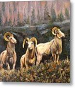 Rocky Mountain Sheep Metal Print