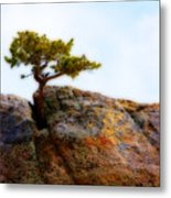 Rocky Mountain Tree Metal Print