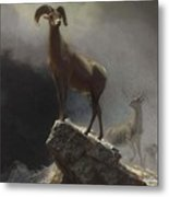 Rocky_mountain_sheep_or_big_horn,_ovis,_montana Metal Print