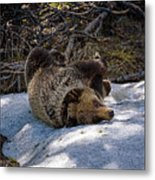 Roll In The Snow Metal Print