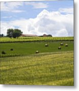 Rolling Green Hills With Trees Metal Print