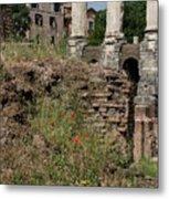 Roman Poppy Metal Print