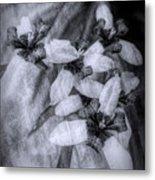 Romantic Island Iris In Black And White Metal Print