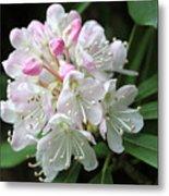 Romantic Rhododendron Metal Print