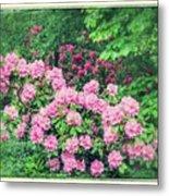 Romantic Rhododendrons Metal Print