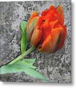 Romantic Tulip Metal Print