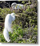 Rookery Family Metal Print