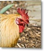 Rooster 1 Metal Print