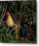 Rooster 2 Metal Print
