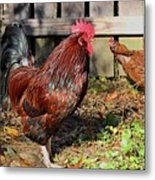 Rooster And Friend Metal Print