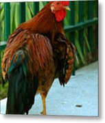 Rooster By The Fence Metal Print