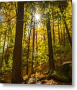 Rooster Comb Trail Metal Print