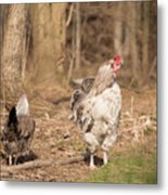 Rooster In The Woods. Metal Print