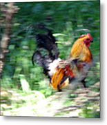 Rooster On The Island Metal Print