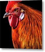Rooster Pride Metal Print