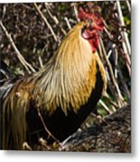 Rooster Protecting Hen Metal Print