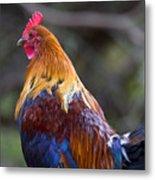 Rooster Rooster Metal Print