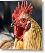 Rooster Up Close And Personal Metal Print