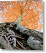 Root Of The Matter Metal Print