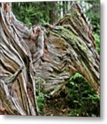 Roots - Welcome To Olympic National Park Wa Usa Metal Print by Christine Till