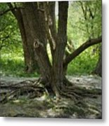 Roots Above Metal Print