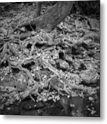 Roots And More Roots Metal Print