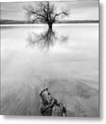 Roots And Trees Metal Print