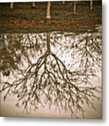 Roots Metal Print by Derek Selander