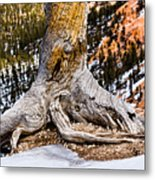 Roots Gripping The Edge Metal Print