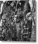 Roots Help Ripe Metal Print