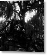 Roots Of Life Metal Print