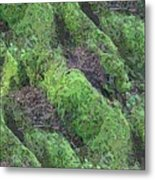 Roots Of The Ages Metal Print