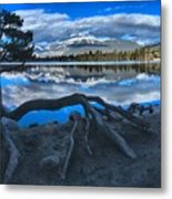 Roots On The Edge Of Beauvert Metal Print
