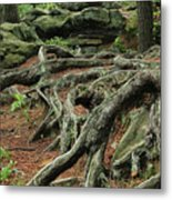 Roots On The Forest Floor Metal Print
