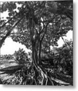 Roots To Roof Metal Print