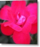 Rosa Roja Metal Print