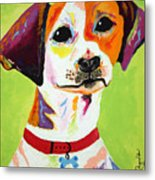 Roscoe The Jack Russell Terrier Metal Print