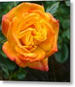 Rose - Irish Eyes Metal Print